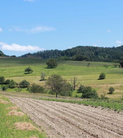 Un nuovo sito per l'Agriturismo Le Capanne