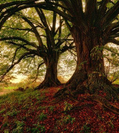 Le porte del bosco – Il Waldkindergarten