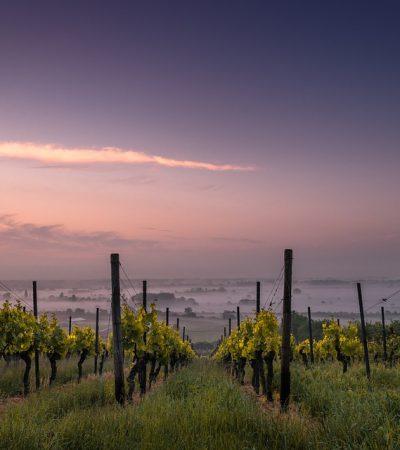 Andiamo a piedi nudi tra le vigne: è tempo di vendemmia!