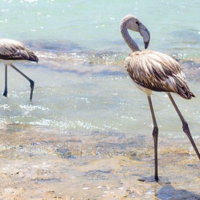 Idee per viaggi originali in primavera ed estate: scrittura creativa a Pantelleria!